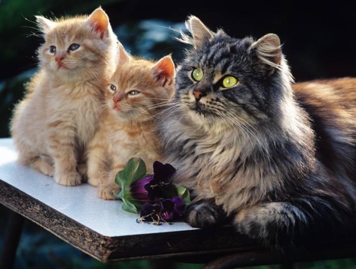 Позитивная подборка фотографий животных в тройке