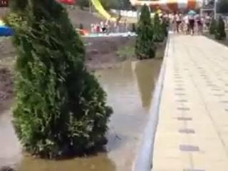 Аквапарк болото