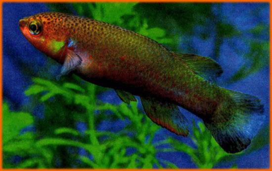 Существует рыба, способная прожить на суше два месяца без вреда своему здоровью