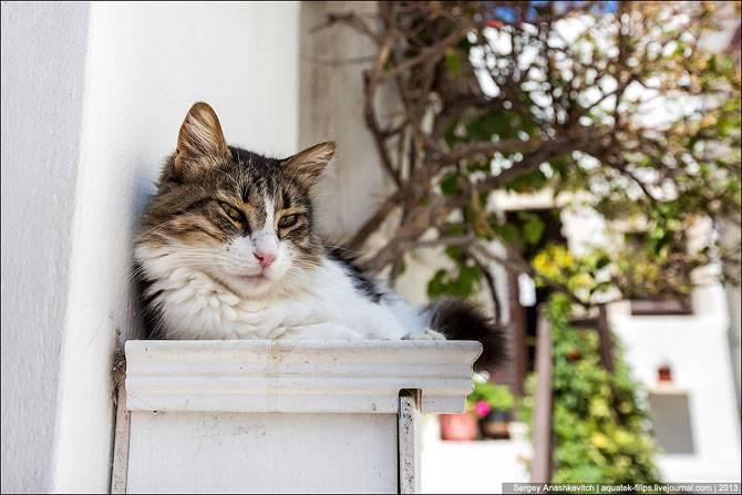 Cуровые кикладские коты (26 фото)