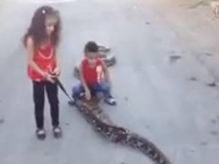 Малыши гуляют со змеей