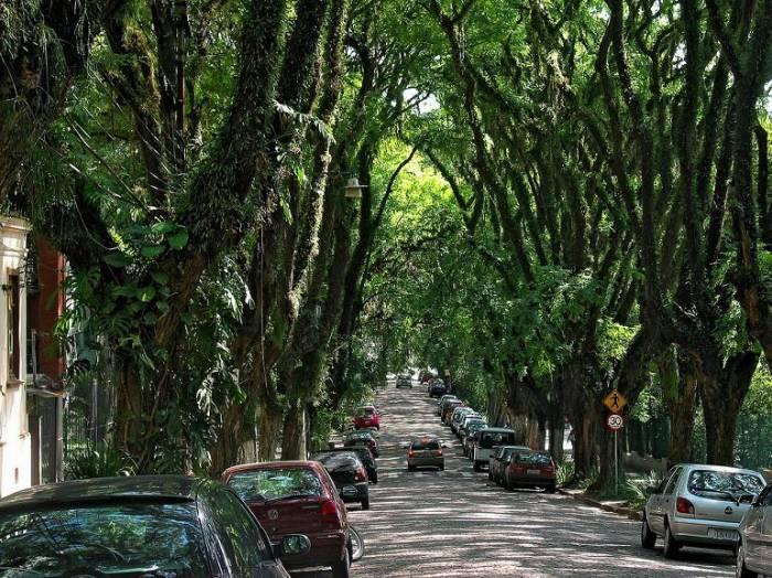 Руа-Гонсалу-де-Карвальо. Самая красивая улица в мире (6 фото)
