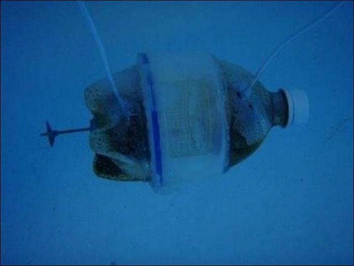 Хомяк в подводной лодке (7 фото)