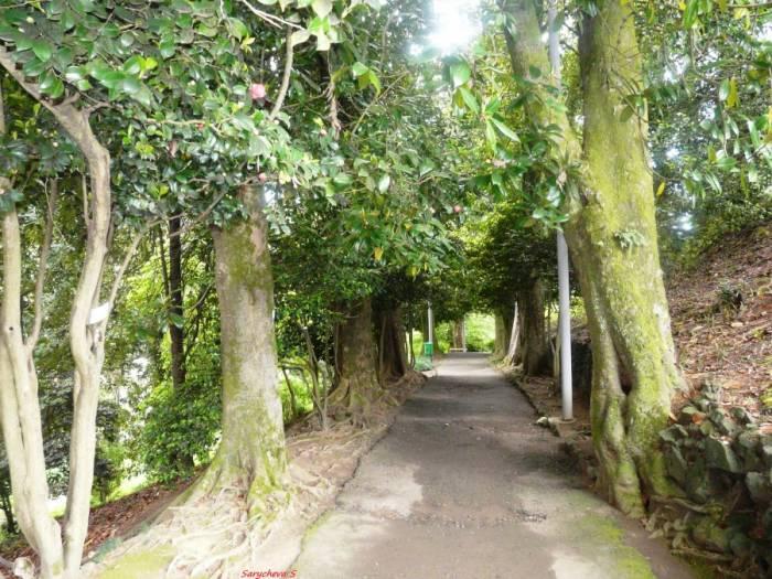 Ботанический сад в Батуми (21 фото)