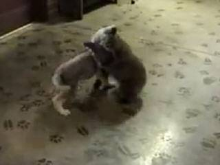 Медвежонок играет с собакой