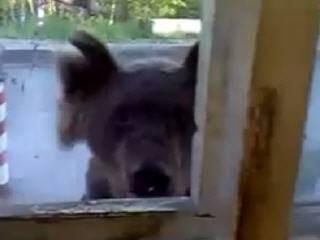 Медведь пришёл в гости