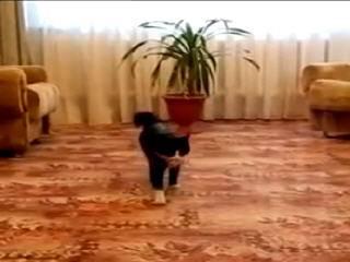 Собака в теле кота