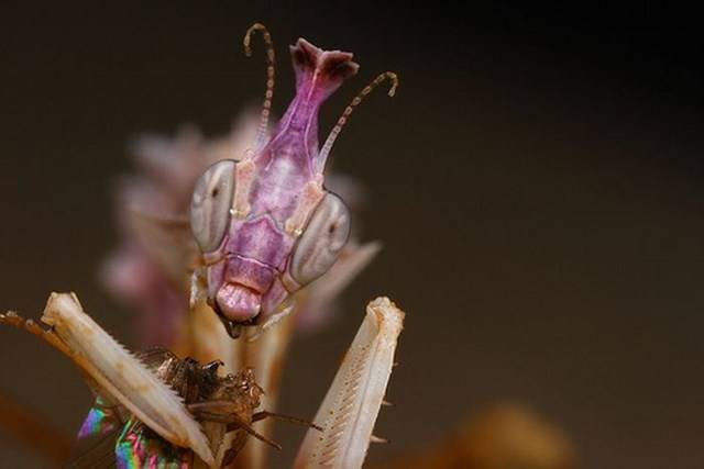 Самые необычные создания нашей планеты (63 фото)