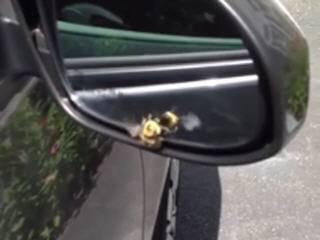 Пчелка любуется своей красотой