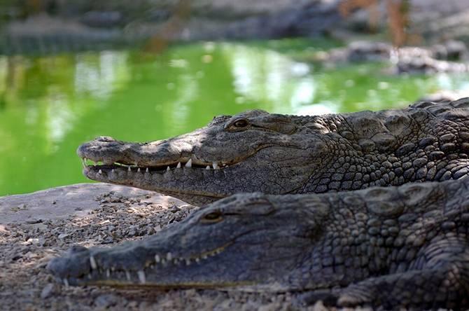 Здесь живут крокодилы… (23 фото)