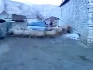 Бараны окружили машину