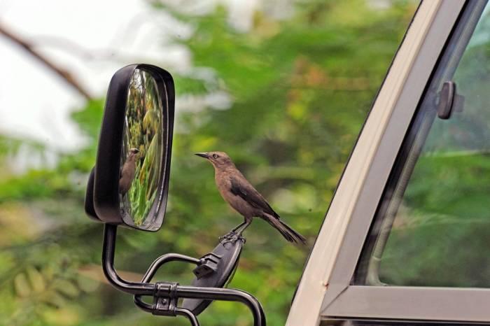 Битва с отражением в зеркале (10 фото)