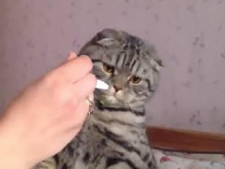 Кот ест мороженное