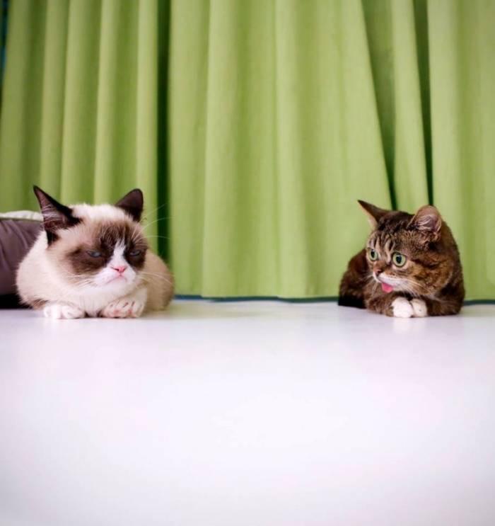 Милые и забавные животные (34 фото)