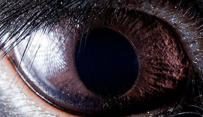 Глаза животных и рыб (13 фото)