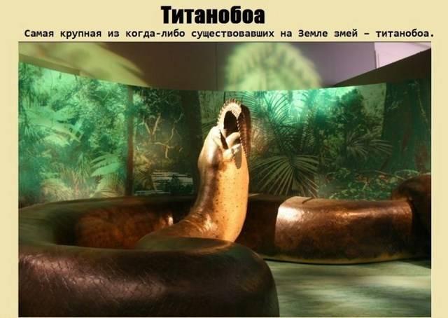 "Интересно о гигантской змее ""Титанобоа"" (5 фото)"