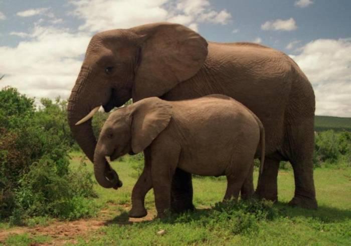 4 места, где можно увидеть слонов в дикой природе (5 фото)