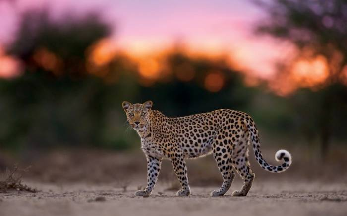 Красота дикой природы Африки (15 фото)
