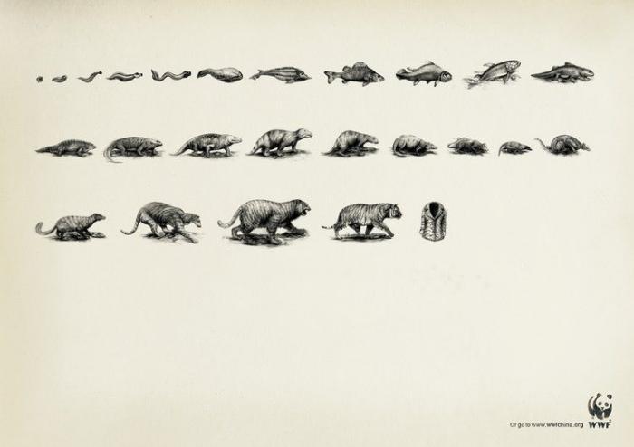 Реклама дикой природы (41 фото)