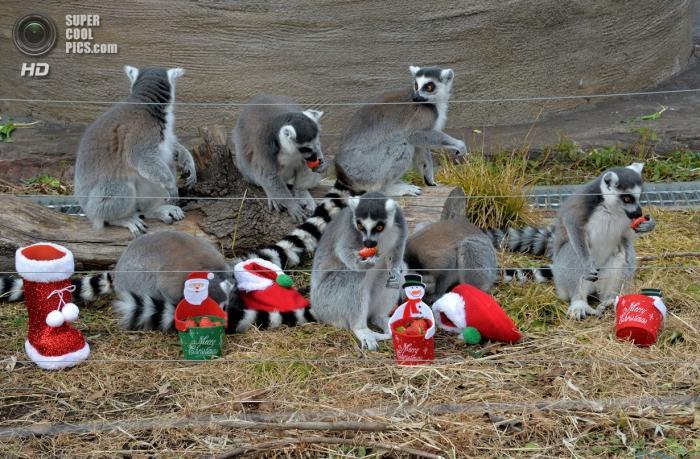 Рождество в зоопарках (16 фото)