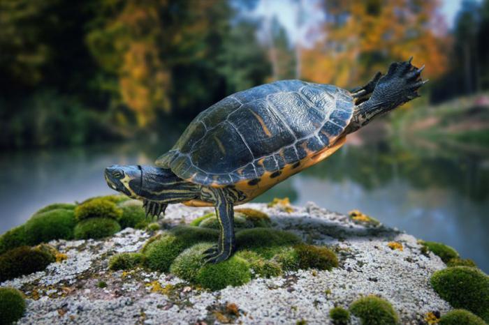 Фотографии дикой природы (15 фото)