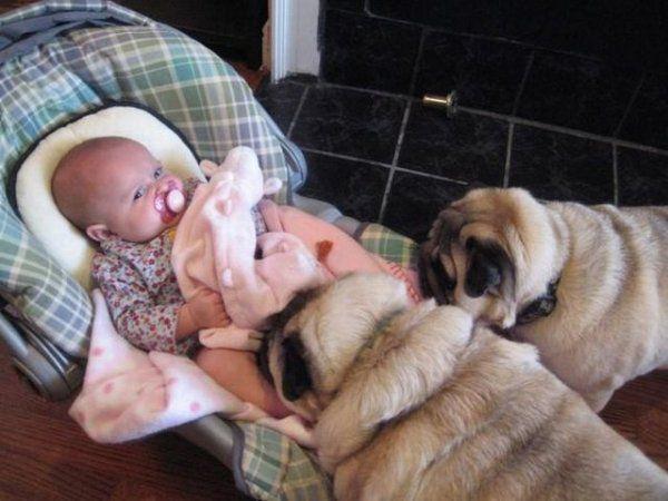 Реакция младенцев, которые увидели собаку (10 фото)