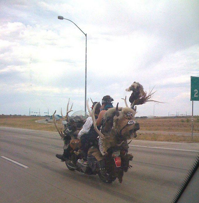 Странные люди, которых можно встретить в пути (71 фото)