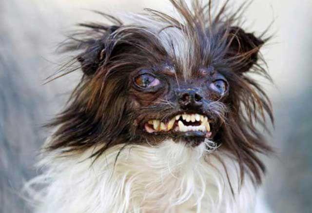 Самая страшная в мире собачка (3 фото)