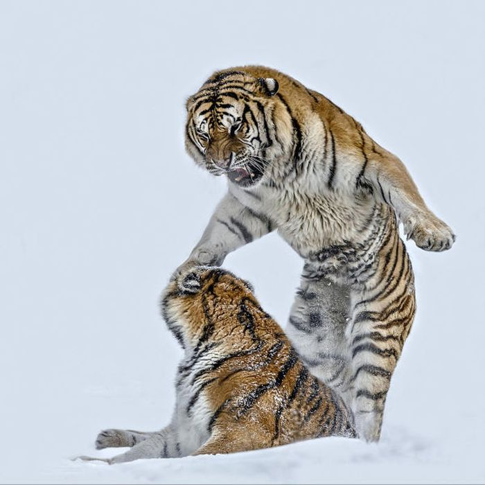 Превосходные фотографии дикой природы (48 фото)