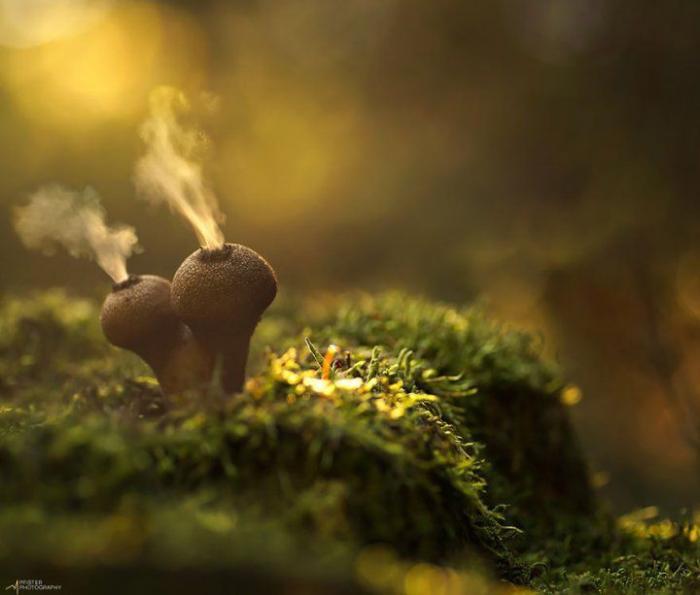 Мистический мир грибов в фотографиях (25 фото)