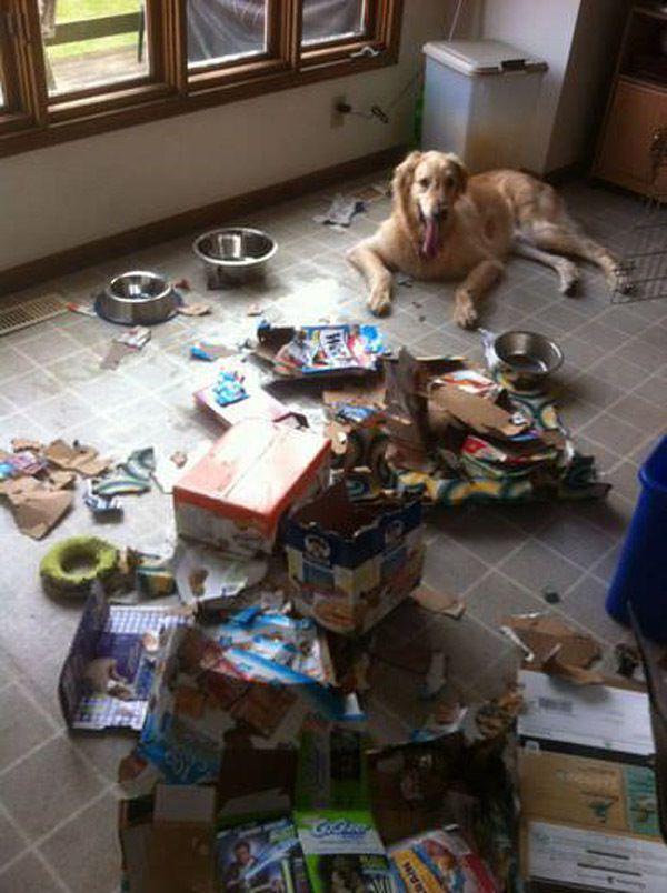 Чем занят пес, когда хозяев нет дома (24 фото)