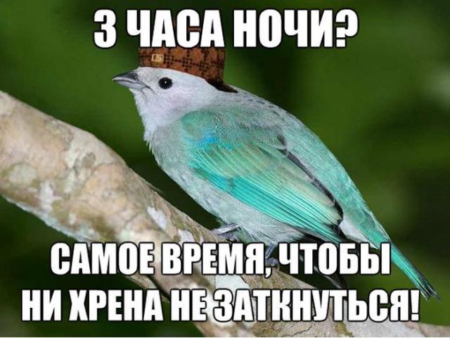 Интернет-мемы обо всем на свете (35 фото)