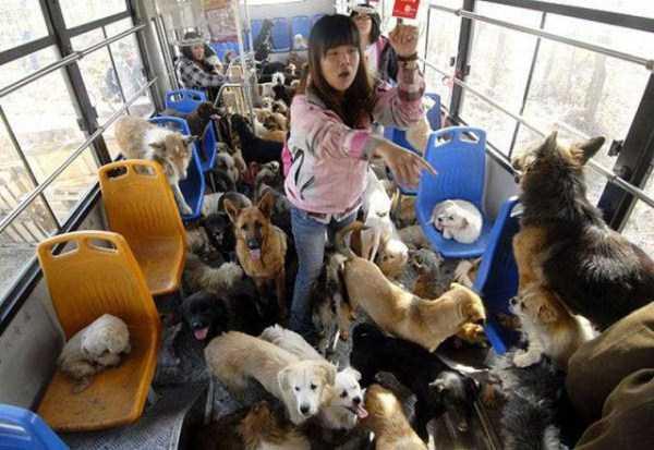 Такое можно встретить только в Азии (49 фото)