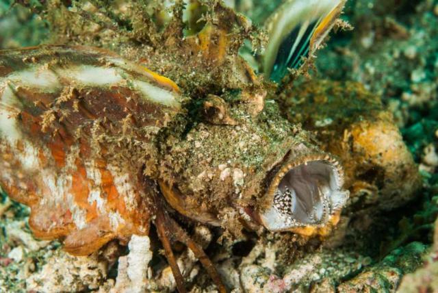 Самые страшные морские создания (18 фото)