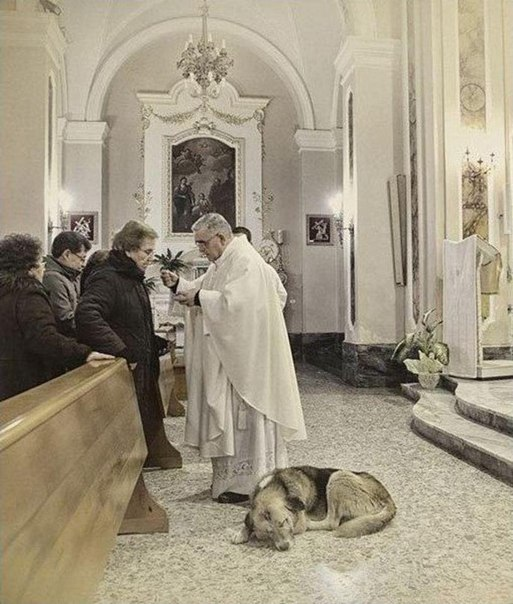 Собака ежедневно приходит в церковь и ждет умершую хозяйку (6 фото)