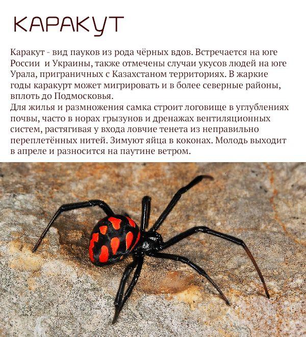 Самые опасные животные России (17 фото)