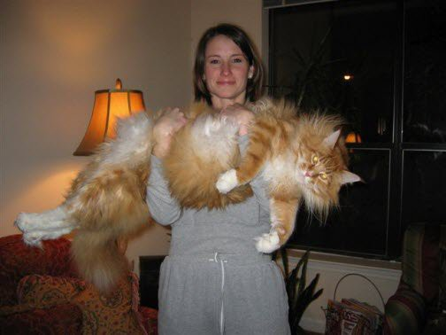 16 больших котов, которые совсем не кажутся домашними питомцами (17 фото)