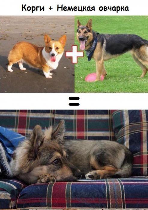 Результат любви собак разных пород (10 фото)