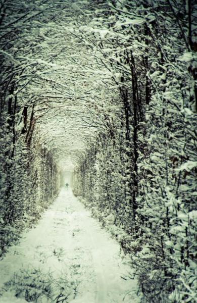 Тоннель любви в Украине - свежий фотоотчет (7 фото)
