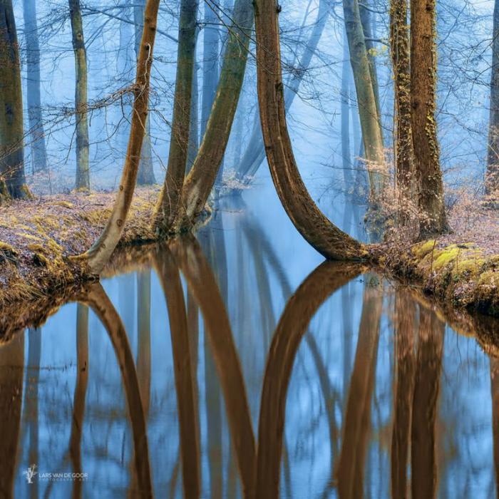 Лесные пейзажи голландского фотографа Ларса ван де Гура (19 фото)