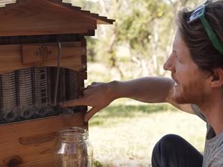 Уникальный пчелиный улей