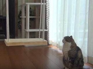 Кот и качели