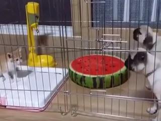 Котенок строит щенков