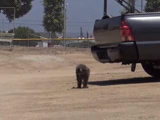 Собака помогает спасателям