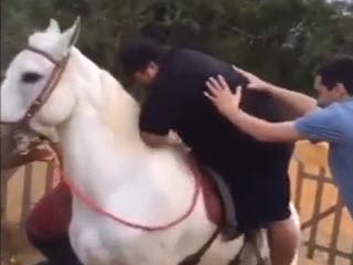 Лошадку жалко
