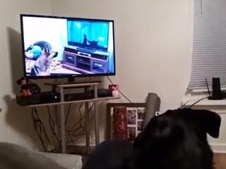 Как собаки смотрят мелодрамы
