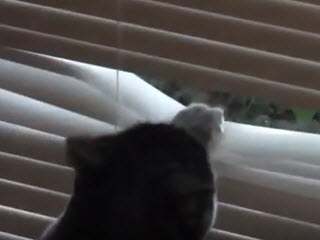 Кот в поисках птички