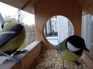 Подкармливайте птиц
