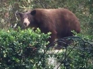 Две собаки прогоняют медведя