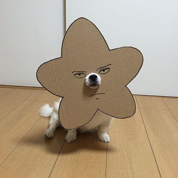 Собака примеряет новые образы (25 фото)